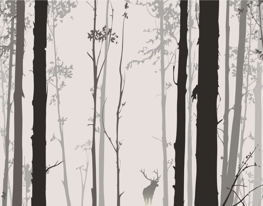 Shadow Forest Image